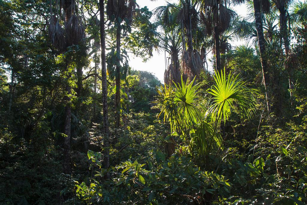 French Guiana 13